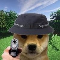 Mr_Doge